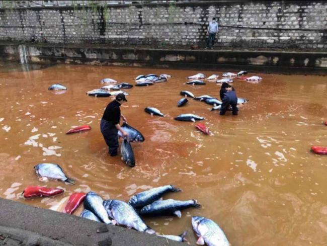 """""""淄博火锅鱼""""揭环保黑幕, 水污染, 环境污染"""